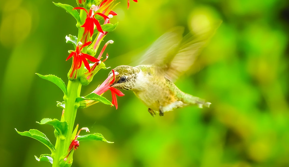 Hummingbird About Us.jpg