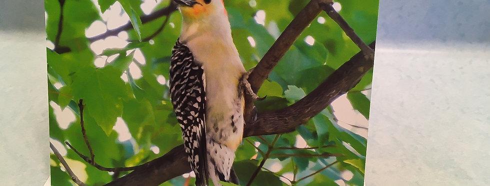 Red-bellied Woodpecker Blank Note Card