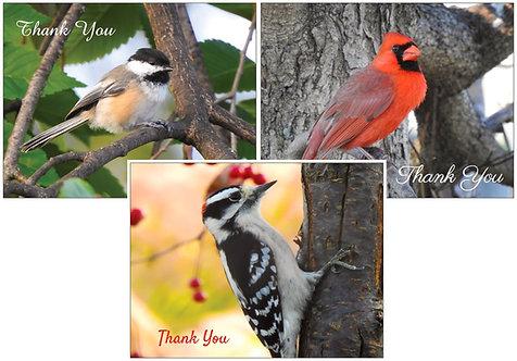 Backyard Birds Thank You Card Set (3 cards)