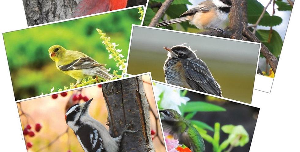 Cute Bird Birthday Cards (6 pack)
