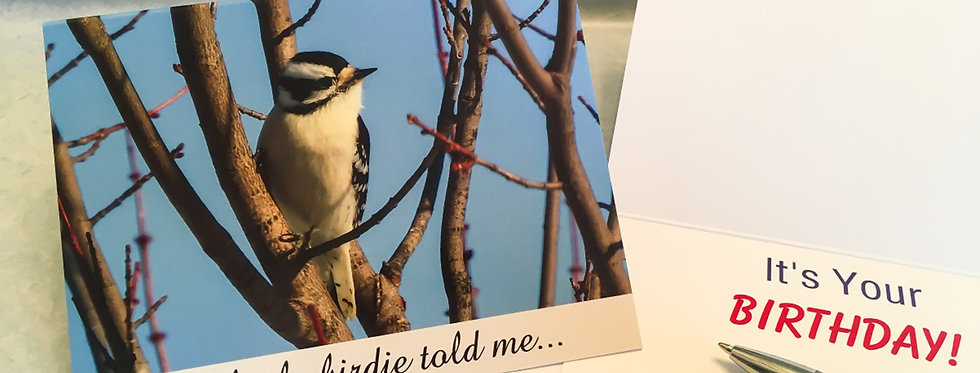 Downy Woodpecker Birthday Card