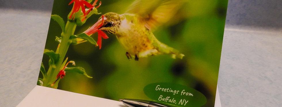 Greetings from Buffalo, NY Hummingbird Card