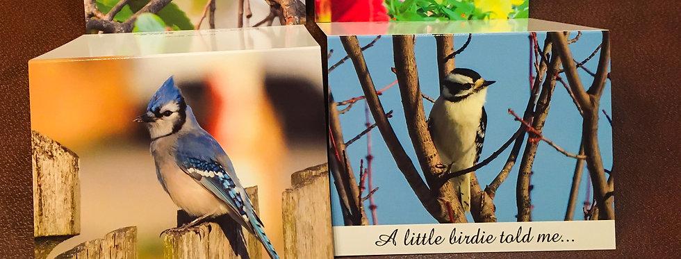Backyard Birdie Card Pack (4 pack variety)