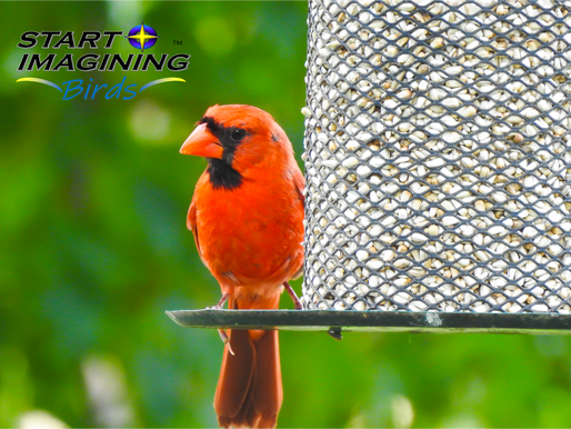 Picking the Right Seed and Feeder