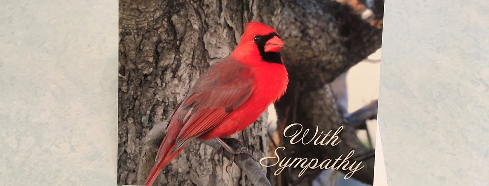 Cardinal With Sympathy Blank Note Card