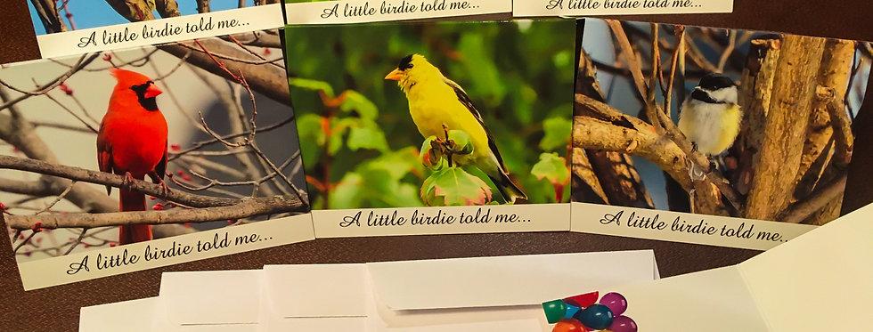 Cute Bird Birthday Cards (6 pack variety)