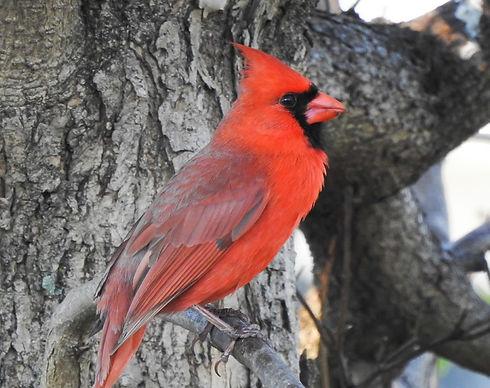 Cardinal Canvas Updated JPG.jpg