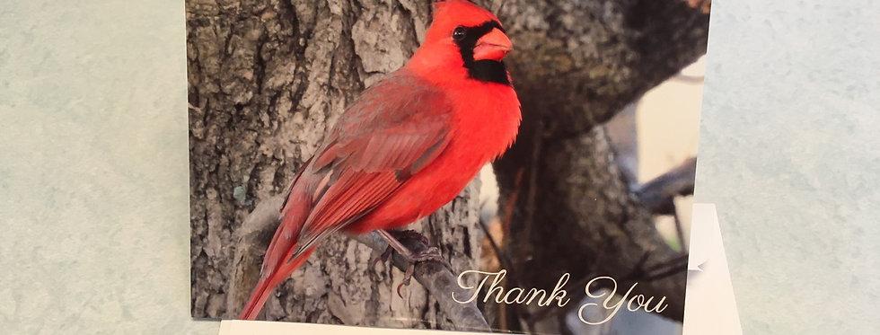 Cardinal Thank You Card