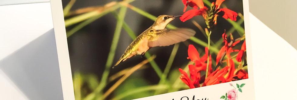 Hummingbird Thank You Cards (6 pack)