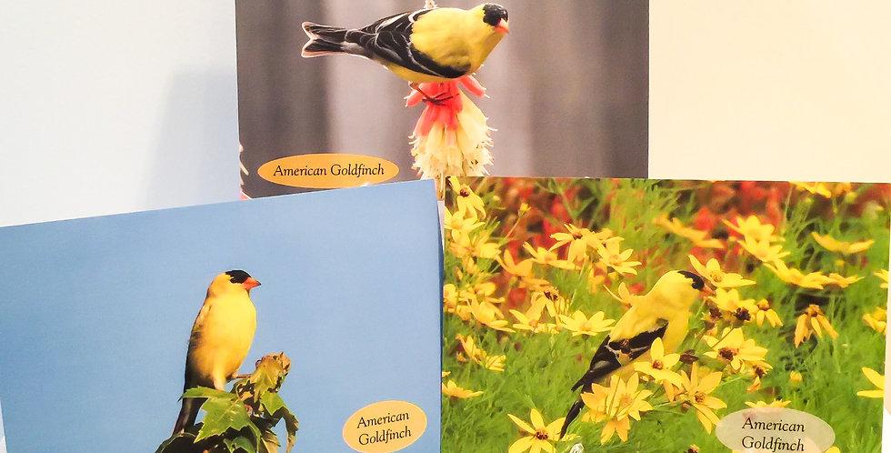 Goldfinch Set (3 Photos)