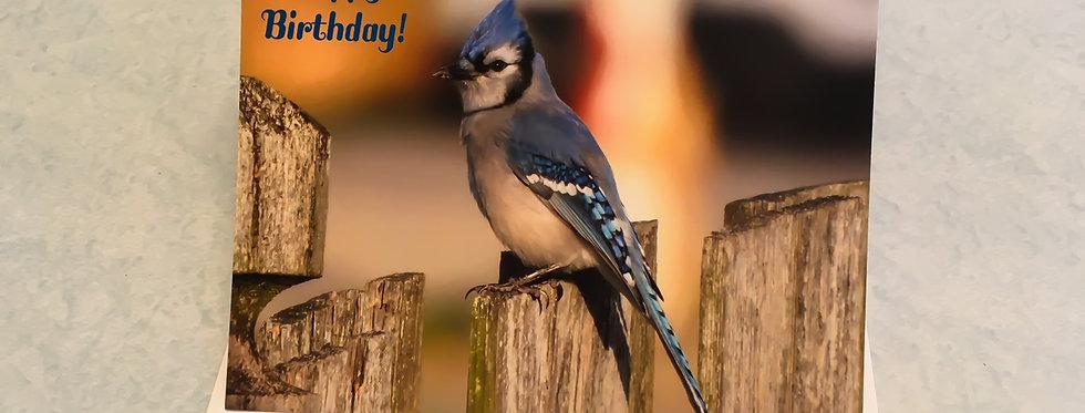 Blue Jay Birthday Card