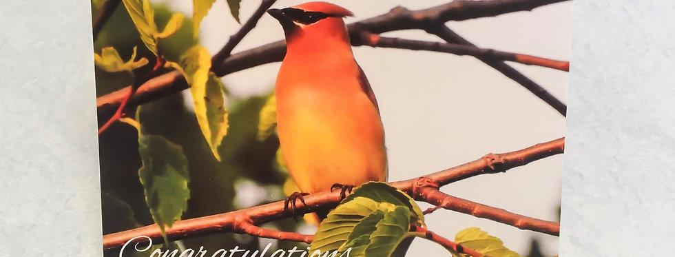 Cedar Waxwing Congratulations Blank Note Card