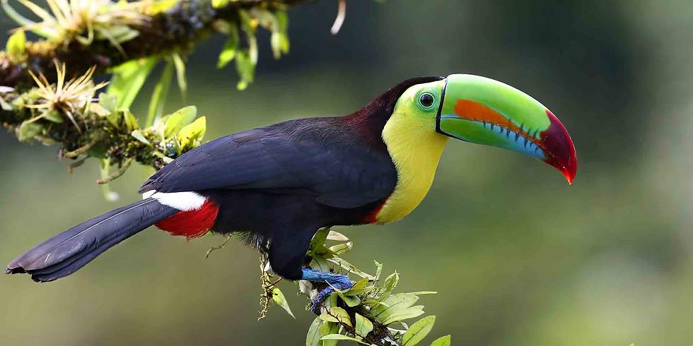 Pura Vida in Costa Rica - Teacher Travel Program