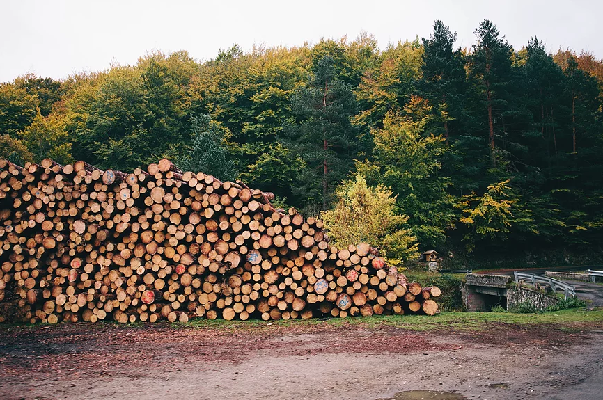 This image shows a picture of stacks logs in an open field