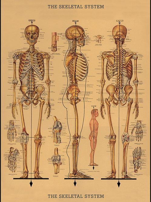 Skeleton Poster / Gift Wrap