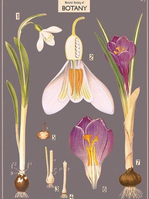 Botany Poster / Gift Wrap