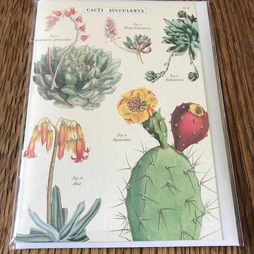 Cacti - Succulents...
