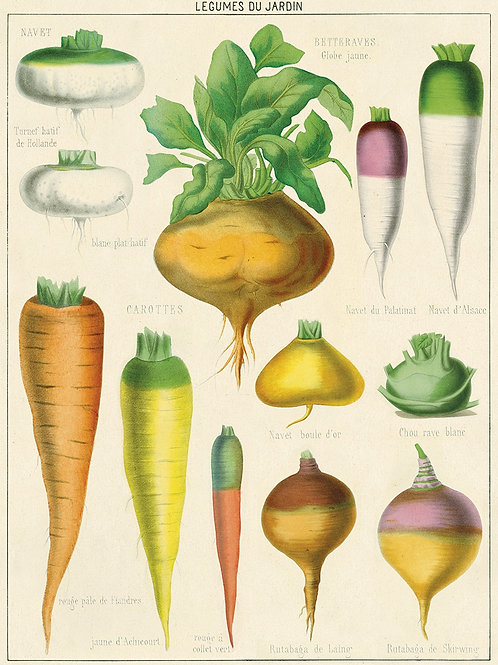 Vegetable Poster / Gift Wrap