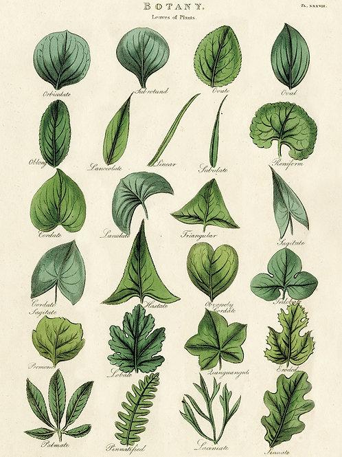Leaf Poster / Gift Wrap