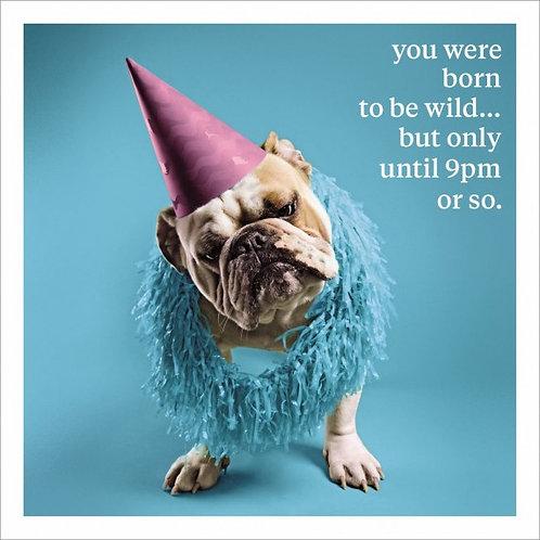Born to be wild...