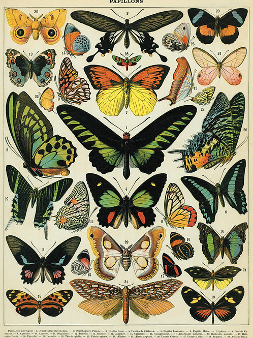 Butterfly Poster / Gift Wrap