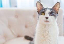 Jeni-Foster-Cat-1009