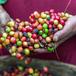 Café au bureau: Le 100% Arabica est-il vraiment ce qu'il vous faut?