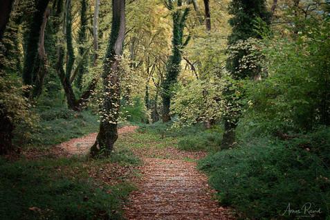 Greens Fairy Tales #2