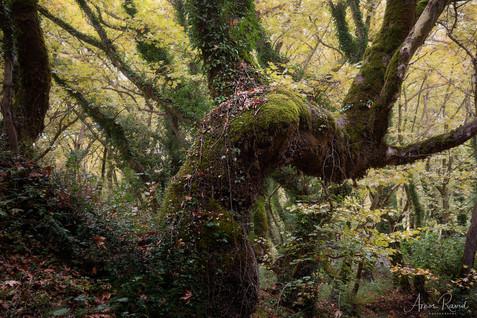Greens Fairy Tales