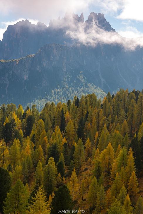 Half Foerst Half Mountains