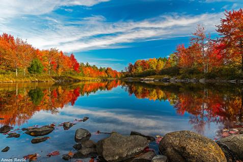 New England Foilage