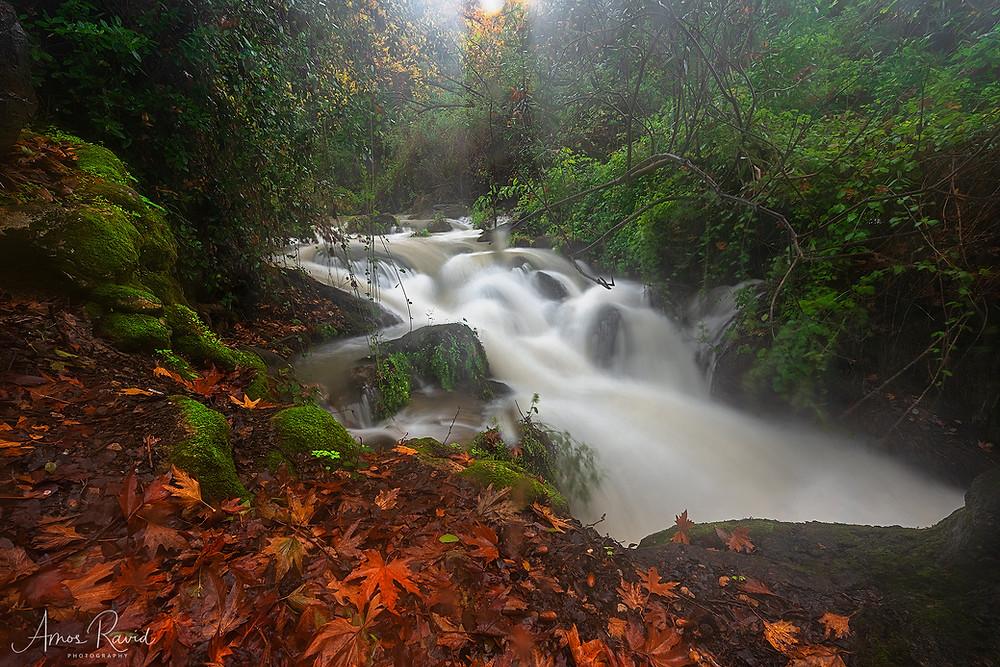 Banias Nature Reserve