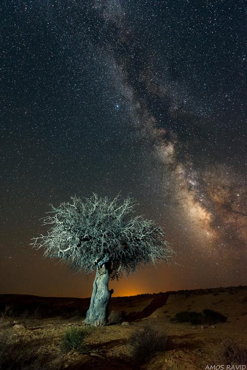 The Tree Of Lite