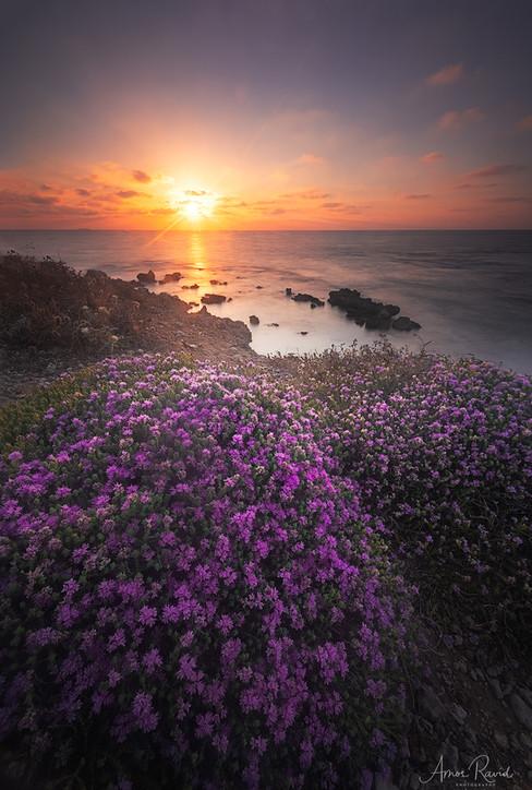The Aromatic Beach