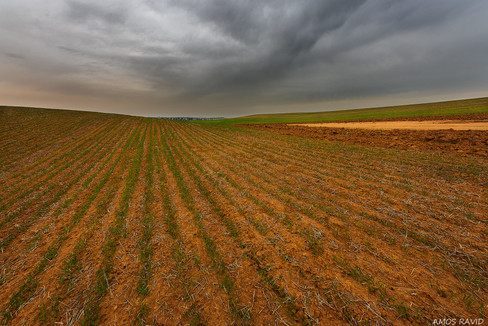 A Field In The Winter