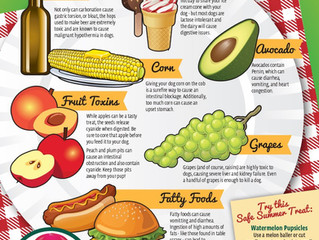 Toxic Foods to Avoid