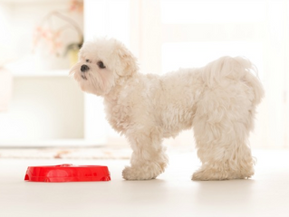 The Best Food Options for Your Dog with Allergies.