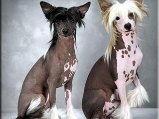 Hypoallergenic Dogs, Myth or Truth?