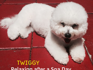 Most Affordable Dog Groomer In Miami
