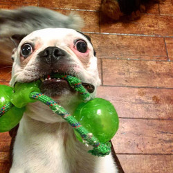 Come and bring your pooch for a playtime in our Daycare, we assure you that he will have a fun stay!