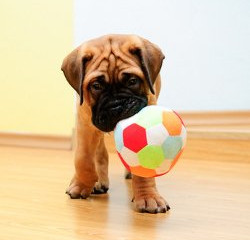 How To Choose The Best Puppy Dog Toys