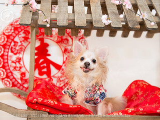 6 Great Ways to Celebrate Chinese New Year With Your Pet!