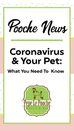 Coronavirus and Your Pet: What You Need To Know