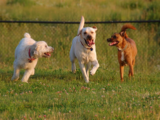 The Top Ten Dog Parks in Miami.