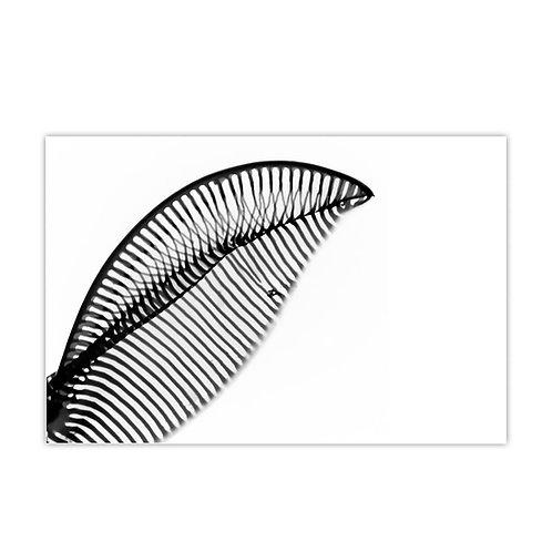 Diatomée Parisienne, Pascal Jean Lopez