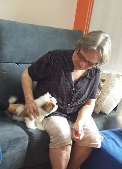 Filhotes de yorkshire, www.denguinhos.com.br, denguinhos, pet store denguinhos, filhotes de yorkshire a venda, filhotes de yorkshire em sp, filhotes de yorkshire , www.denguinhos.com.br
