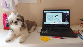 Shih Tzu na mesa com notebook.jpg
