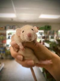 Rattie Baby