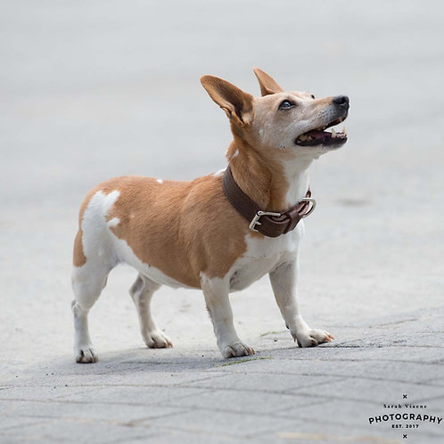 Hondenhalsband ongevoerd