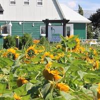 Pioneer Flower Farms